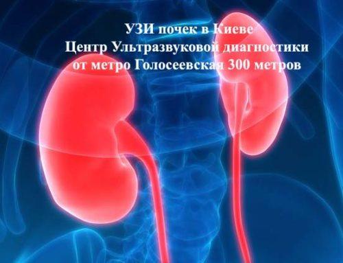 УЗИ почек в Киеве