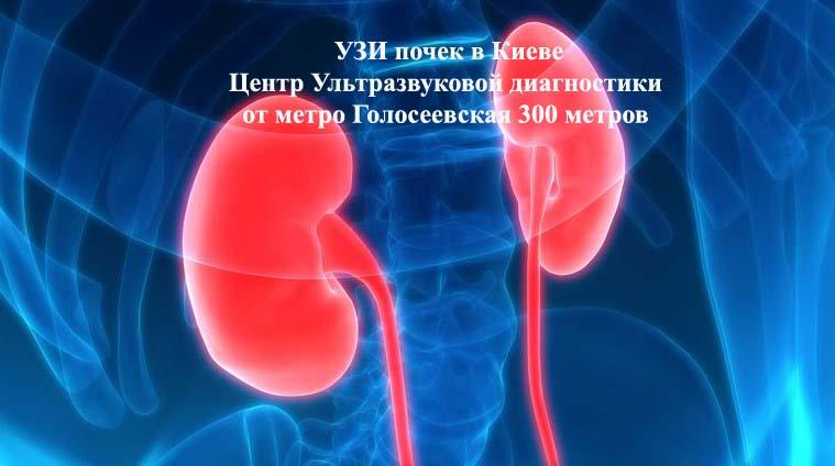 УЗИ почек в Голосеевском р-не г. Киева в Центре ультразвуковой диагностики